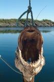 丑恶的鱼 免版税库存图片