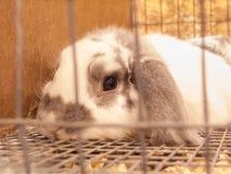 丑角兔子 免版税库存图片