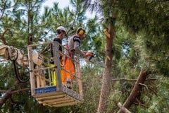 专业伐木工人切开树干 免版税库存照片