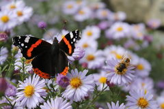 世界、蝴蝶和蜂的生活 库存图片