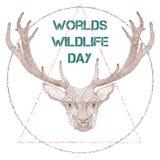 世界与鹿的野生生物天 库存照片