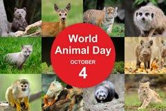 世界动物天 库存照片