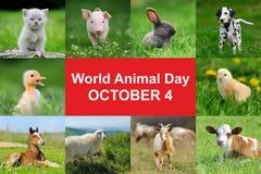 世界动物天 免版税库存图片