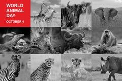 世界动物天 库存图片