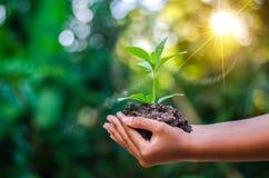 世界地球日在生长幼木的树的手上 Bokeh绿化拿着在自然领域草森林co的背景女性手树 免版税库存照片