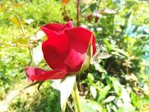 世界多数美丽的花 库存照片