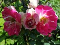 世界多数美丽的花 免版税库存图片