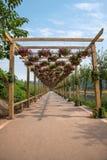 世界庭院的花走廊在巴南,重庆 图库摄影