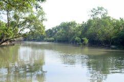 世界最大的美洲红树森林在附近孟加拉国一条美丽的河 免版税图库摄影