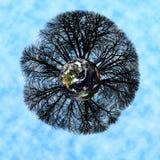 世界树 库存照片