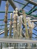 世界植物学 库存照片