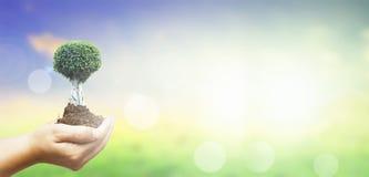 世界环境日概念:拿着在绿色森林背景的人的手大树 免版税库存照片