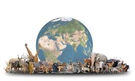 世界的动物与行星地球的 免版税库存图片