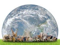 世界的动物与行星地球的 库存图片