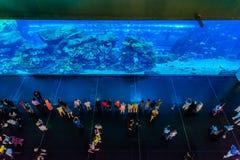 世界的最大的水族馆在迪拜购物中心的 免版税图库摄影