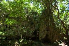 世界遗产名录Sefa Utaki,精神空间在冲绳岛,日本 库存图片