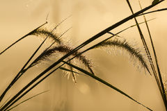 丛与小滴的草,剪影图片 库存图片