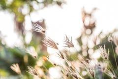 丛与阳光的草 库存照片