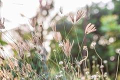 丛与阳光的草 免版税库存照片