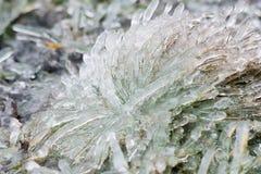 丛冰冷的草在一个冬日 库存照片