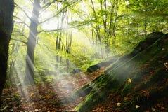 丛林到自然公园里 库存照片