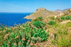 丛生希腊海的海湾与草和, Kos,希腊 库存图片