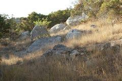 丛石头在杜松森林里 免版税库存照片