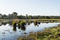 丛草在水表面反射了 免版税库存图片