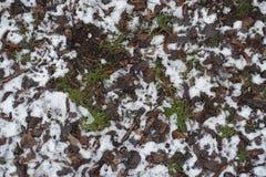 丛草覆盖与下落的叶子和雪 免版税库存图片