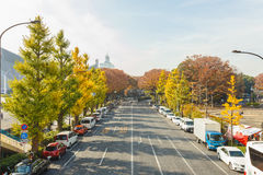 东京、日本- 2016 11月20日,秋天季节,银杏树biloba银杏树、银杏、公孙树和汽车在街道上在健身房a附近 库存图片