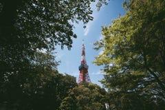 东京塔和绿色叶子背景 库存照片