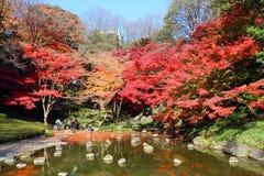 东京秋天 免版税库存照片