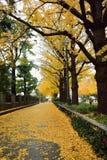 东京金黄银杏树街道 免版税库存照片
