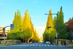 东京,日本- 2014年11月:沿Icho Namiki街的银杏树树在秋天,等待在行人穿越道的未被认出的人民 免版税库存图片
