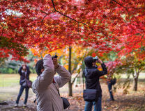 东京,日本- 2014年11月, 30日:采取pict的日本游人 免版税库存照片