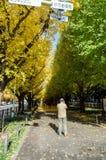 东京,日本- 2013年11月26日:人参观银杏树朝向下来对美济礁纪念画廊的树大道 库存图片