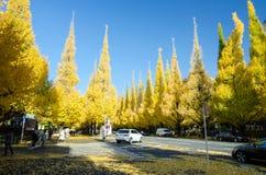 东京,日本- 2013年11月26日:人参观银杏树朝向下来对美济礁纪念画廊的树大道 库存照片