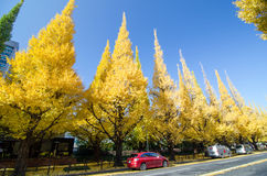 东京,日本- 2013年11月26日:人参观银杏树树朝向下来对美济礁纪念画廊的树大道 图库摄影