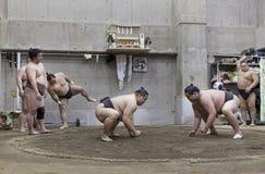 东京,日本- 2016年5月18日:在他们的摊位的日本相扑摔跤手训练在东京 库存图片