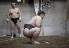 东京,日本- 2016年5月18日:在他们的摊位的日本相扑摔跤手训练在5月18日的东京 2016年 库存图片