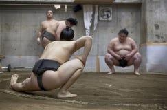 东京,日本- 2016年5月18日:在他们的摊位的日本相扑摔跤手训练在5月18日的东京 2016年 免版税库存图片