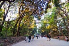 东京,日本- 2013年11月23日:朝向下来对美济礁津沽寺庙的旅游参观森林道路 库存照片