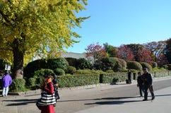 东京,日本- 2013年11月22日:访客享用五颜六色的树 库存图片