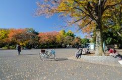 东京,日本- 2013年11月22日:访客在上野公园,东京享用五颜六色的树 免版税图库摄影