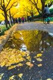 东京,日本- 2016年11月19日 Icho Namiki/银杏树大道,阿梅 免版税库存照片