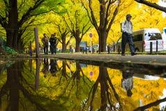 东京,日本- 2016年11月19日 Icho Namiki/银杏树大道,阿梅 库存图片