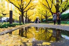 东京,日本- 2016年11月19日 Icho Namiki/银杏树大道,阿梅 免版税库存图片