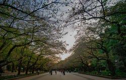 东京,日本- 10月30,2015 :上野公园在秋天,天机智 免版税库存图片