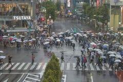 东京,日本- 5月30 :涩谷十字架的未认出的步行者 库存照片