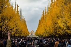 东京,日本- 11月30 :Icho Namiki街在东京, 2014年11月30日 库存图片